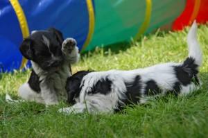 Puppyspel