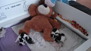 Pupjes blij met beer