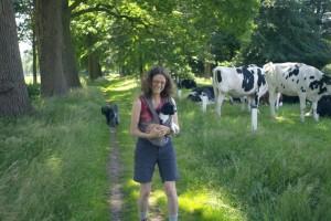 Bij de koeien